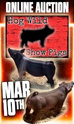 Hog Wild Showpigs