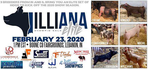 Illiana Elite Pig Sale