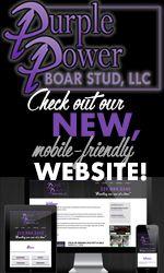 Purple Power Boar Stud