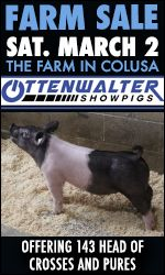 Ottenwalter Showpigs