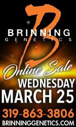 Brinning Genetics