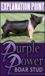 Purple Power Boar Stud