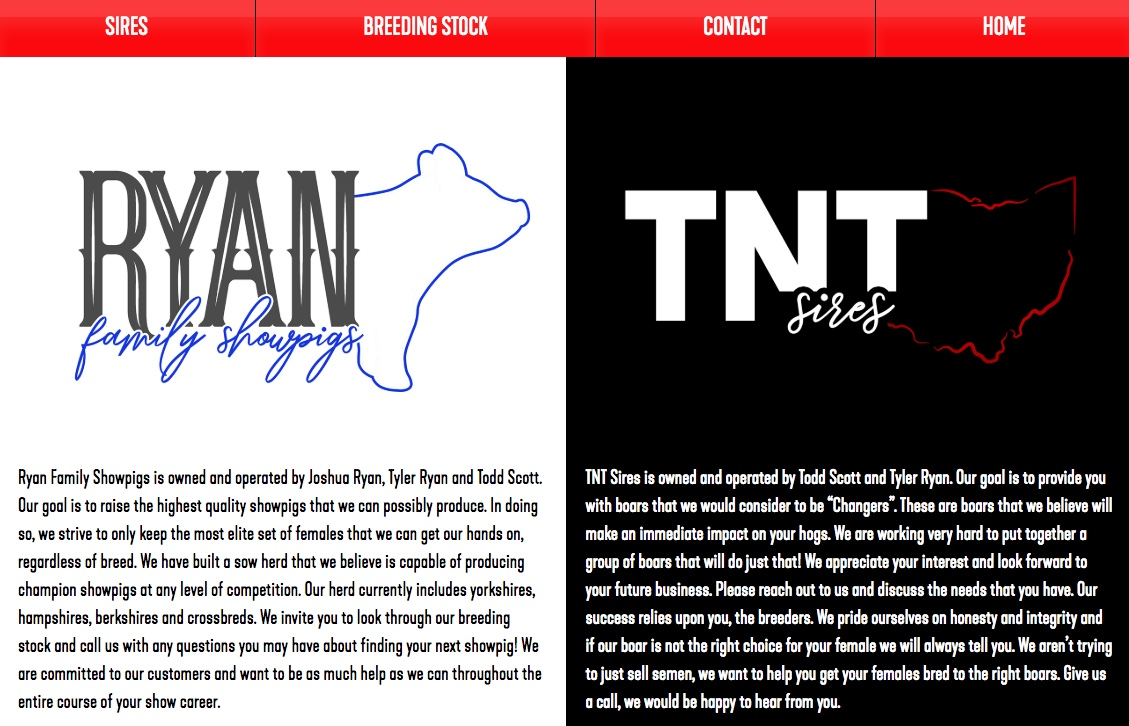 Gold Website Package Example (TNT)