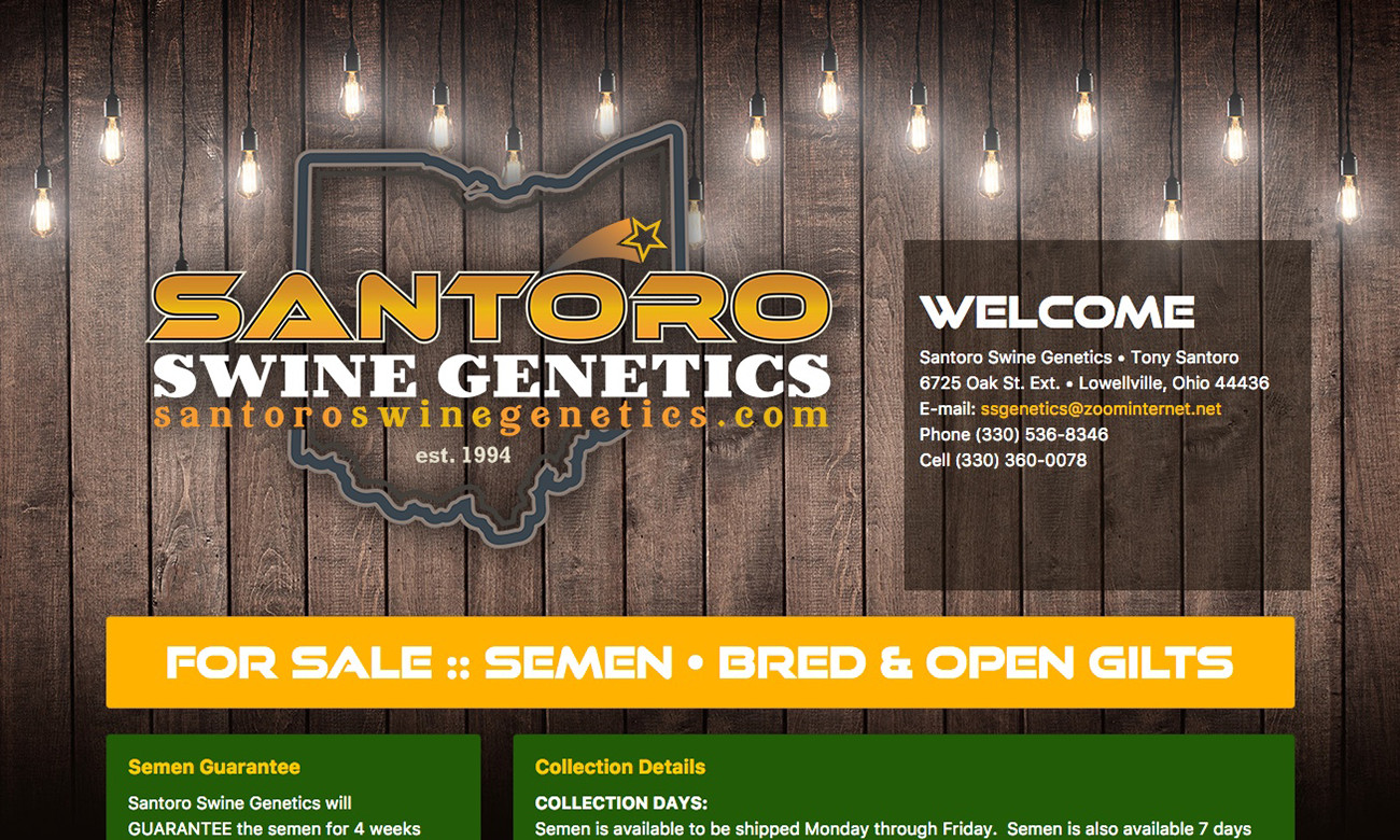 Silver Website Package Example (Santoro)