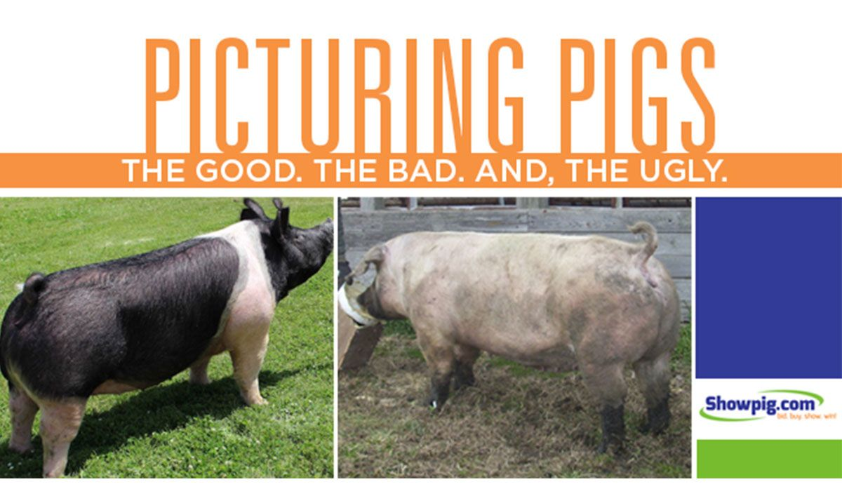 Featured image for the article titled Picturing Pigs : The Good. The Bad. The Ugly.