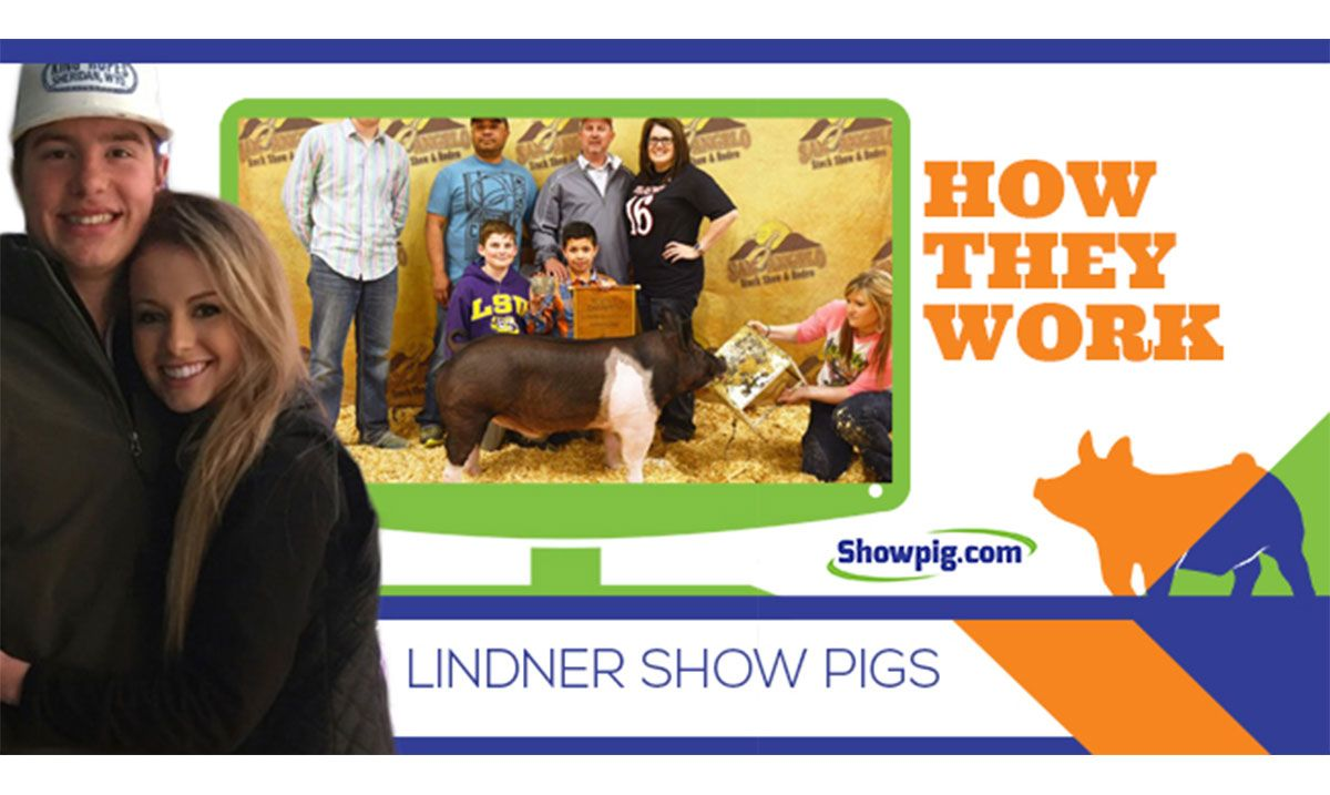 Featured image for the article titled How They Work :: Lindner Show Pigs