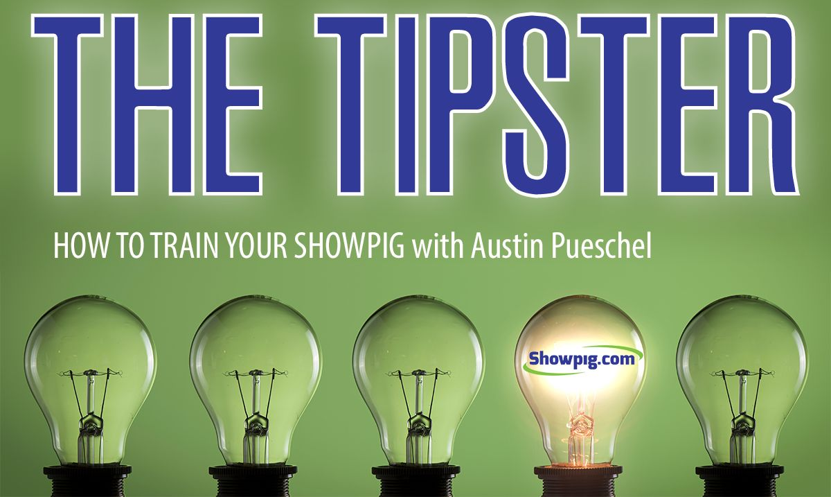 Featured image for the article titled The Tipster :: How to Train Your Showpig
