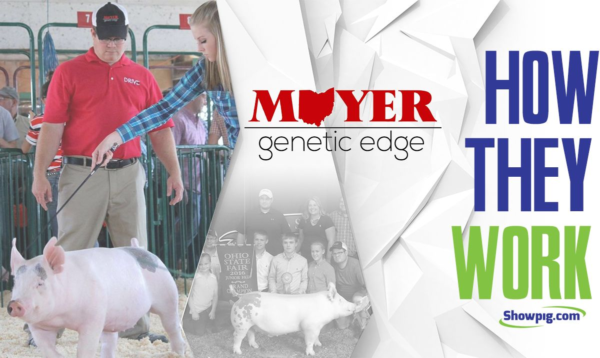 Featured image for the article titled How They Work :: Moyer's Genetic Edge