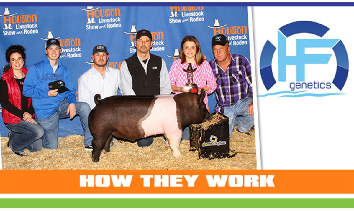 Featured image for the article titled How They Work :: HF Genetics