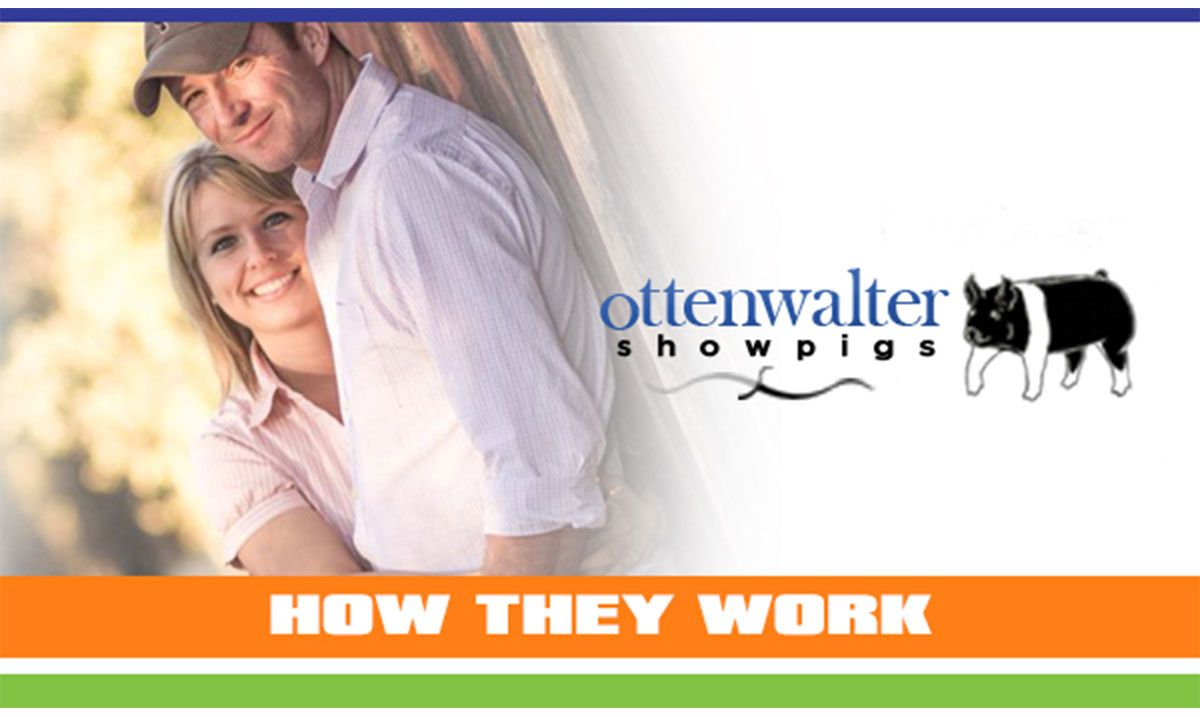 Featured image for the article titled How They Work :: Ottenwalter Showpigs