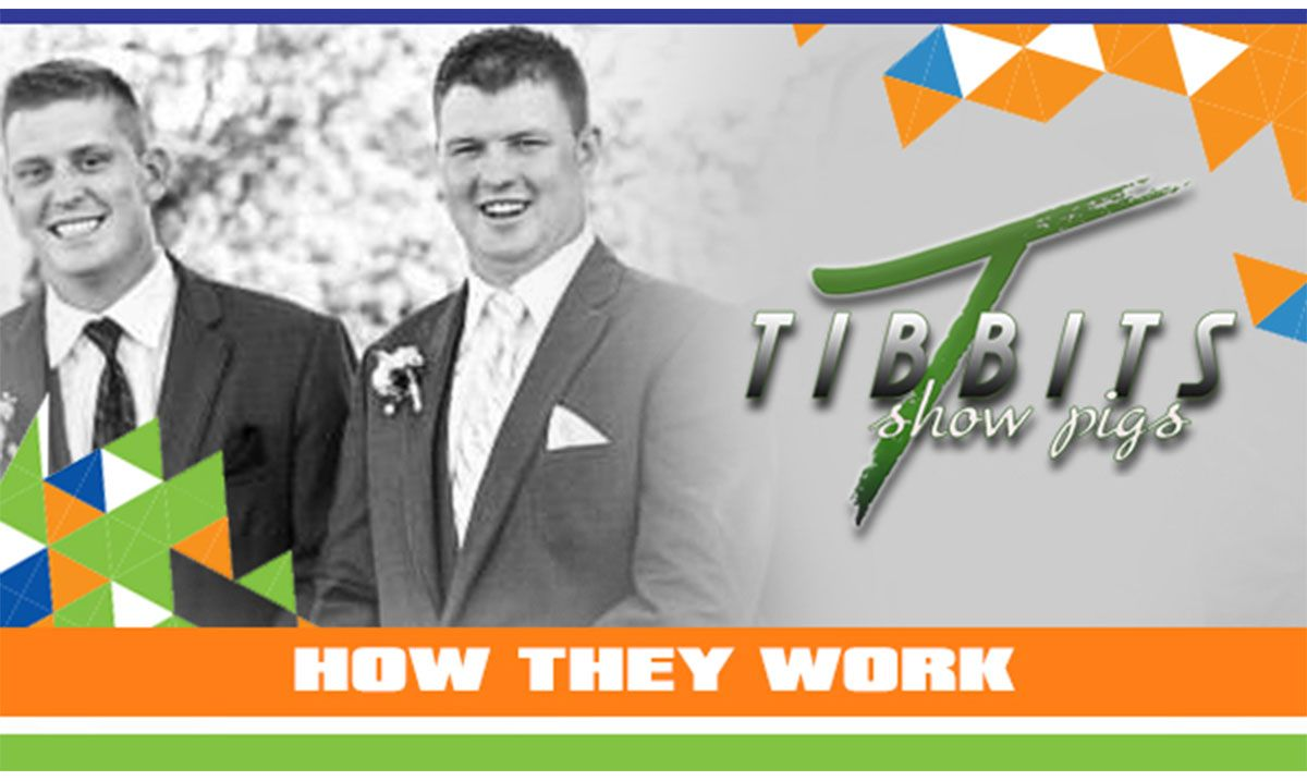 Featured image for the article titled How They Work :: Tibbits Showpigs