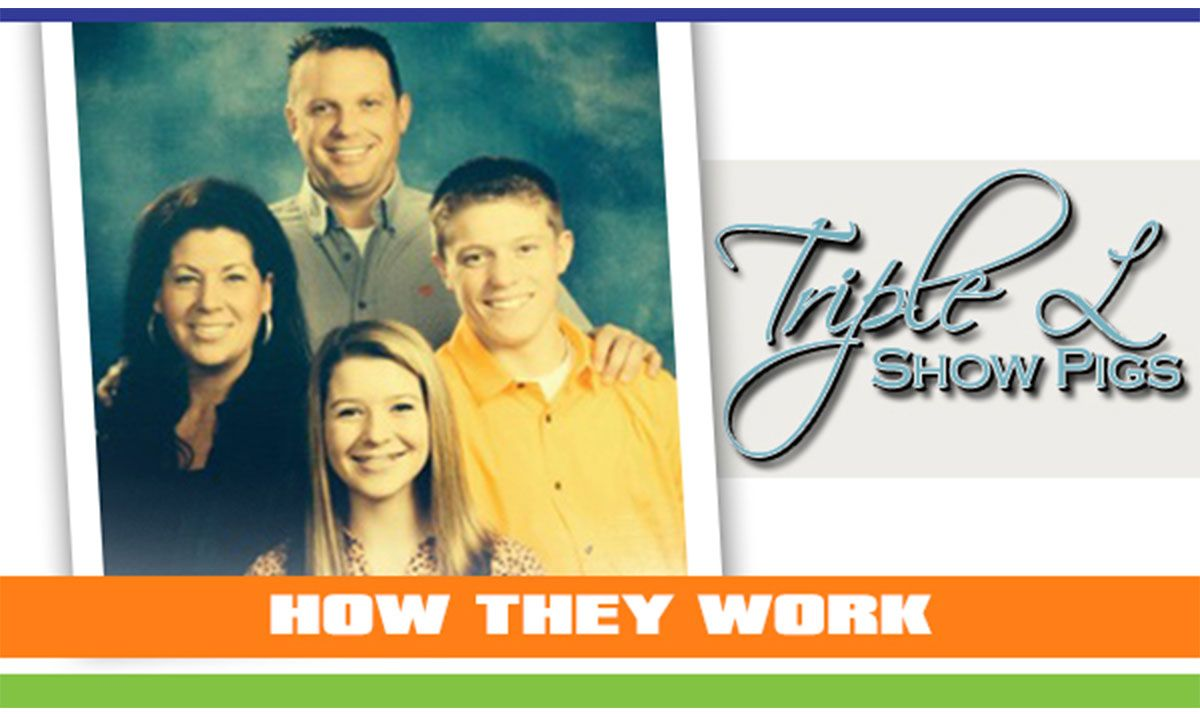 Featured image for the article titled How They Work :: Triple L Showpigs