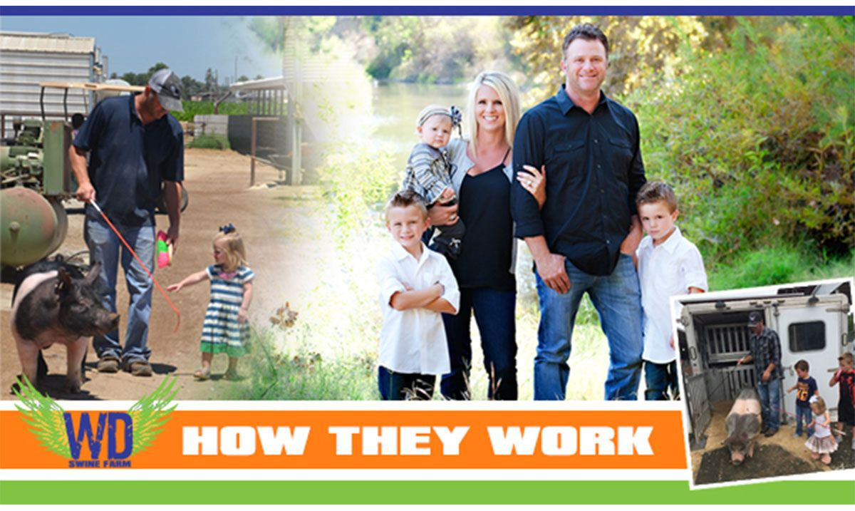 Featured image for the article titled How They Work :: W-D Swine Farm