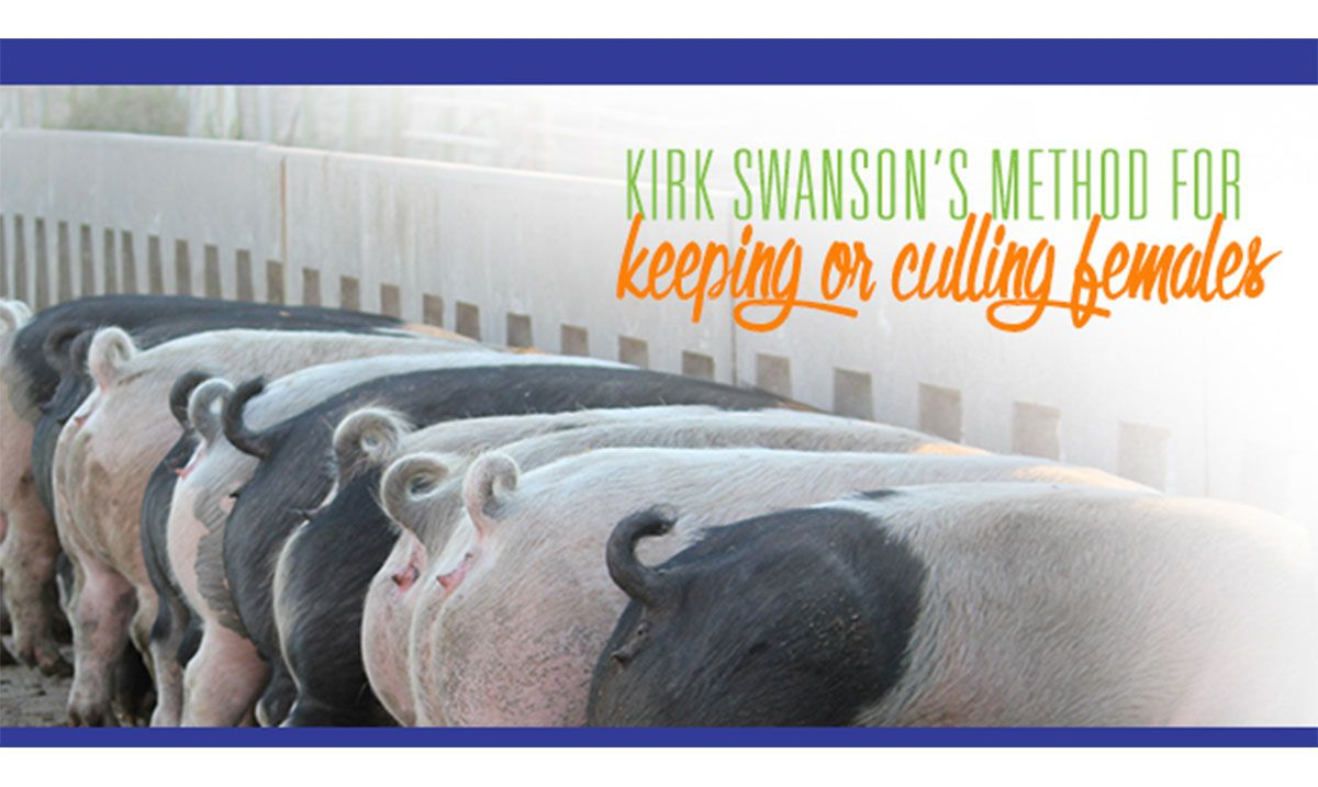 Featured image for the article titled Kirk Swanson's Method for Keeping or Culling Females