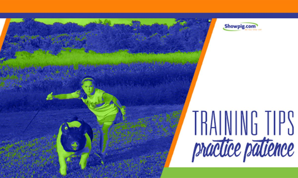 Featured image for the article titled Training Tips: Practice Patience