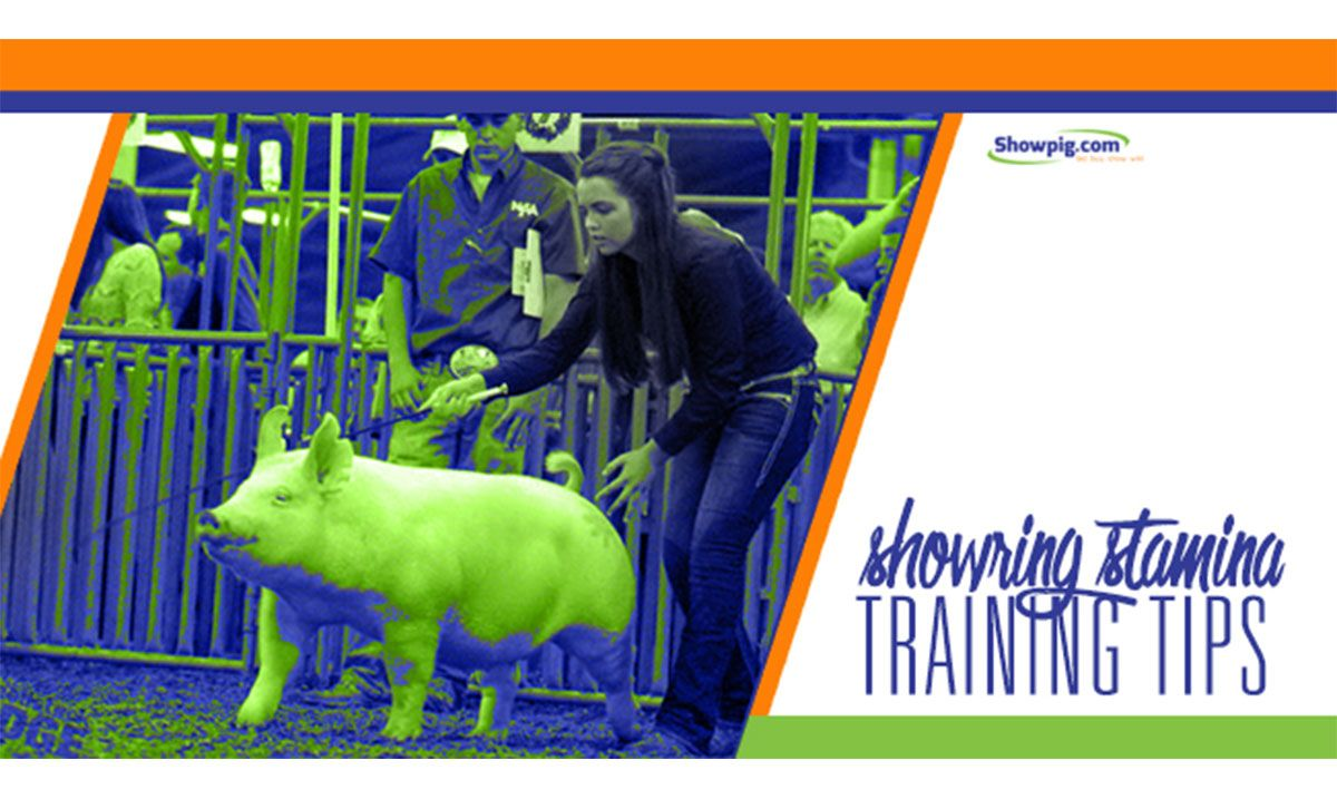 Featured image for the article titled Training Tips: Building Show Ring Stamina