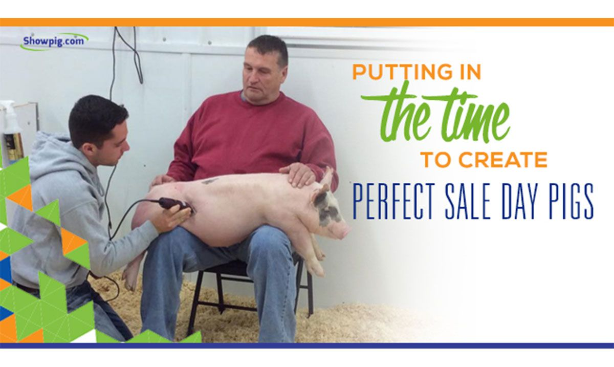 Featured image for the article titled Putting in the Time to Create Perfect Sale Day Pigs