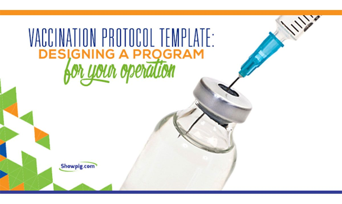 Featured image for the article titled Designing a Vaccination Protocol for Your Operation