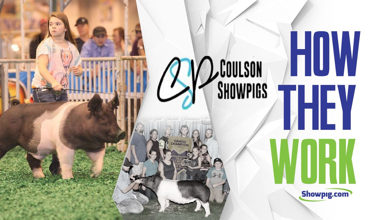 Featured image for the article titled How They Work :: Coulson Showpigs
