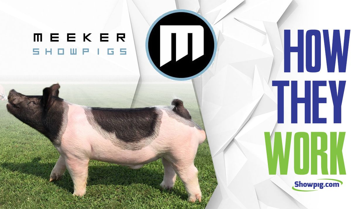 Featured image for the article titled How They Work :: Meeker Showpigs