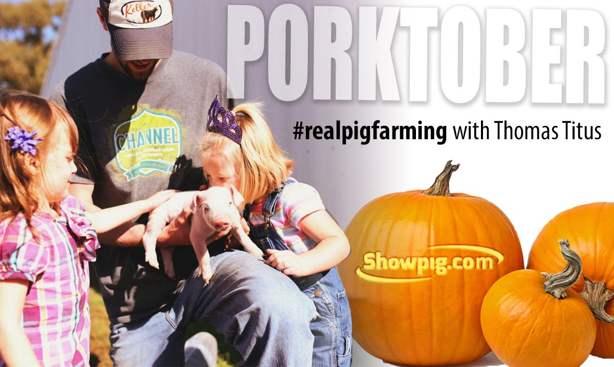 Featured image for the article titled #realpigfarming – Thomas Titus: your farm, your story