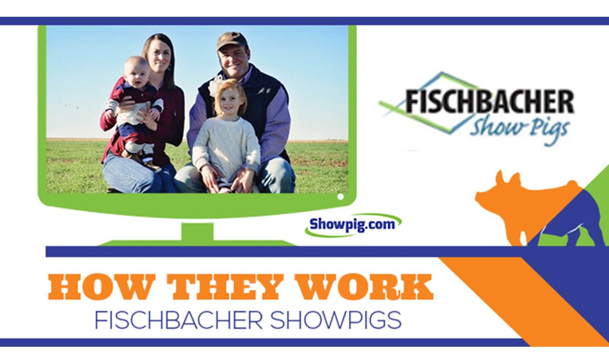 Featured image for the article titled How They Work :: Fischbacher Show Pigs