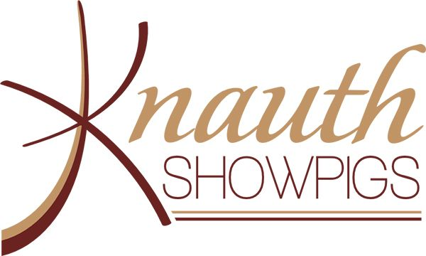 Home showpig online auctions industry directory breeder knauth showpigs junglespirit Gallery