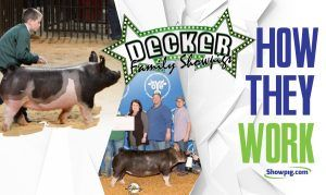 Featured image for the article titled How They Work :: Decker Family Showpigs