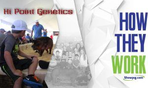 Featured image for the article titled How They Work :: Hi Point Genetics