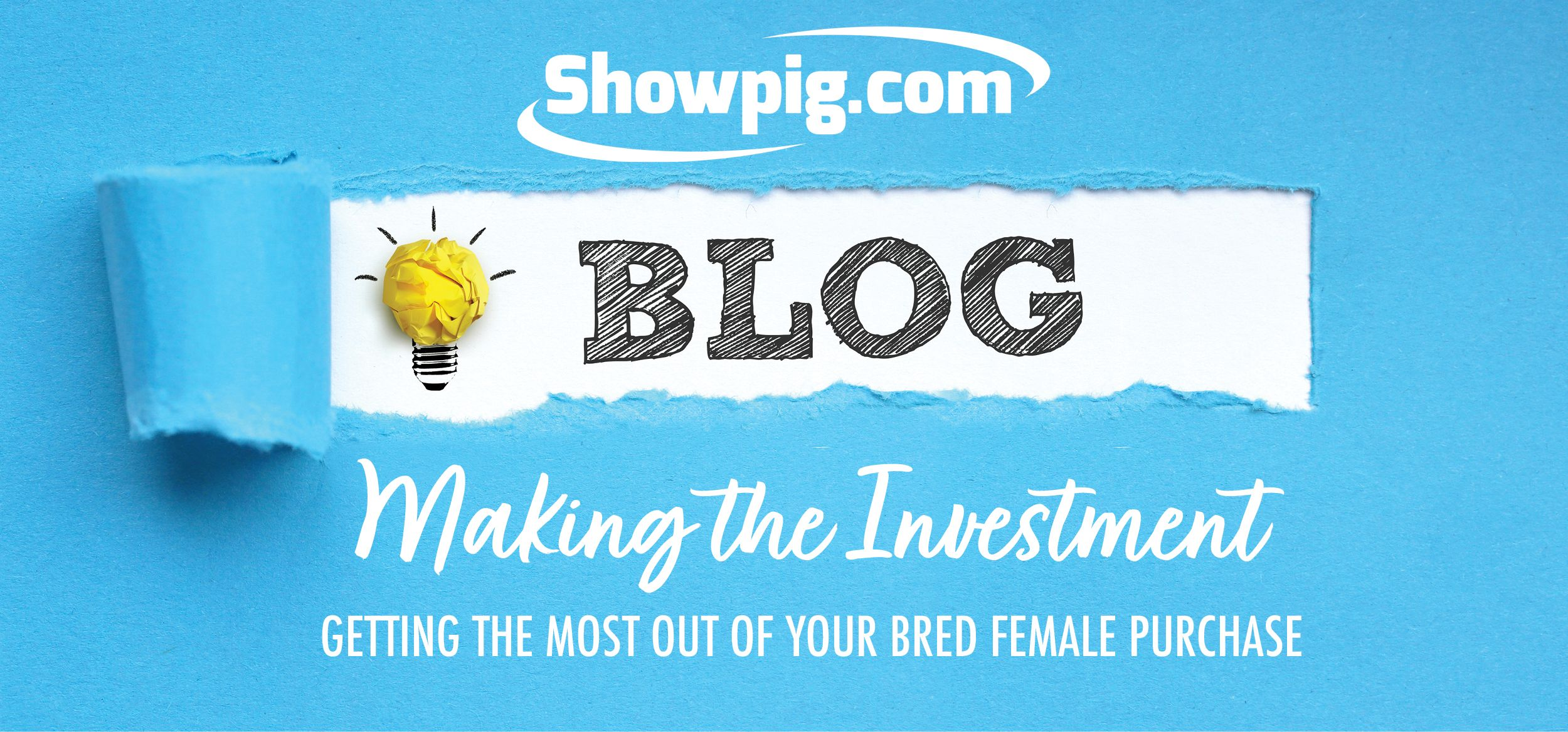 Featured image for the article titled Making the Investment: Getting the Most Out of Your Bred Gilt Purchase
